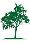 Sticker arbre : SCHEFFLERA