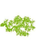 Sticker branche d\'olivier