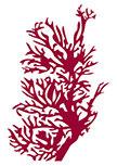 sticker gorgogne