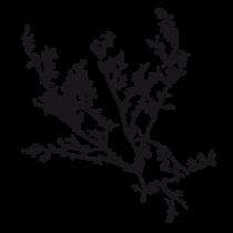 Le stickers branches sauvages vous permettra de décorer l\'intérieur avec un stickers nature noir