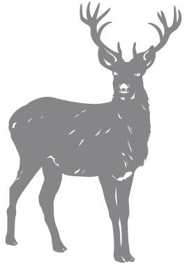 Le roi de la forêt est sur iDzif.com Pour décorer sur le thème forestier, optez pour ce sticker cerf