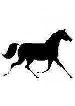 stickers cheval. Vu dans D&CO