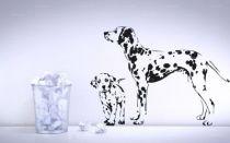 Stickers chien dalmatien
