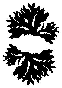 Stickers coraux