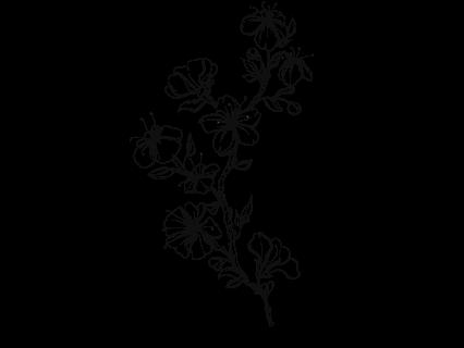 Le stickers fleur sauvage grimpante pour décorer l\'habitat