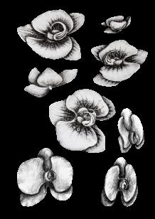 Stickers fleurs orchidée