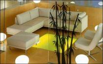 Le stickers forêt bambou vous permettra d\'apporter la nature sur vos murs