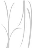 Stickers herbes pour une décoration verte