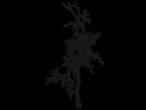 Le stickers nature arbre sans feuilles pour décorer l\'habitat